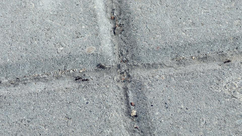 1080p Black Ants Crawling on Ant Trail Between Concrete Urban Paving Slabs Footage