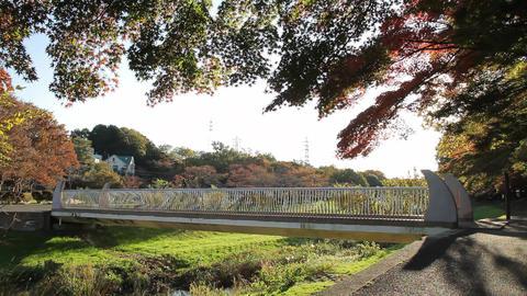 紅葉-秋-橋-樹木/武蔵野公園-野川(現場音あり)-Fix ビデオ