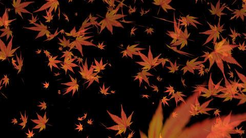 Momiji_ autumn_alpha Animation