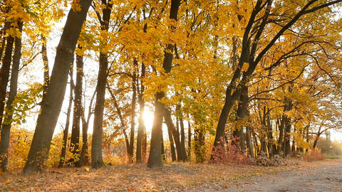 Picturesque landscape in the autumn forest. Bright glare of the sun. Camera in Live Action