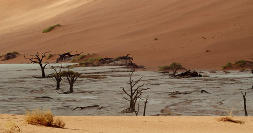 Amazing dry terrain with white sand and lots of dead plants in Namib desert, 4k Live Action