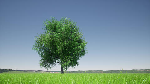Growth tree on green background. Eco green nature forest background template Live Action