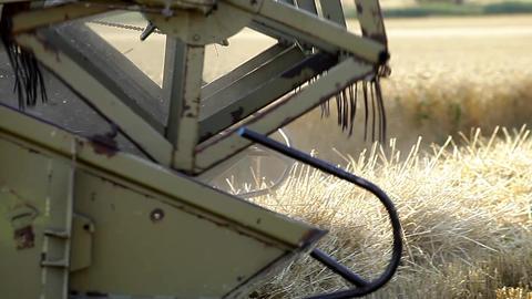 Combine harvests crops Footage