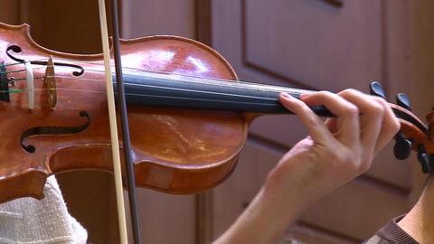 Violin Live Action