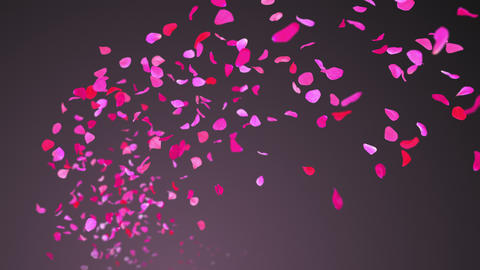 Flying Rose Petals On Purple Background. Seamless Looped GIF