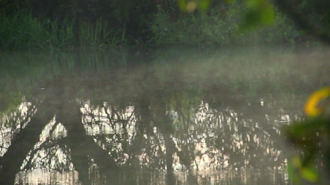 Morning fog hovering over the river, tree reflections in water Footage