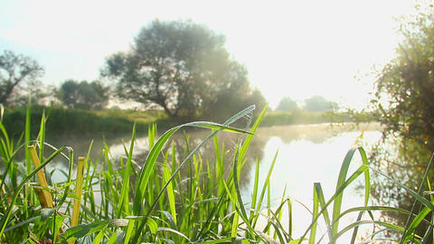 Beautiful green landscape, grass and trees near water, sunshine Footage
