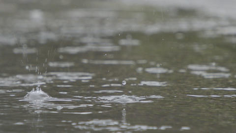 Slow motion of rain drops falling into a water puddle with water splashing Live Action