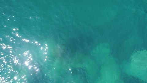 蛸の浜 ライブ動画