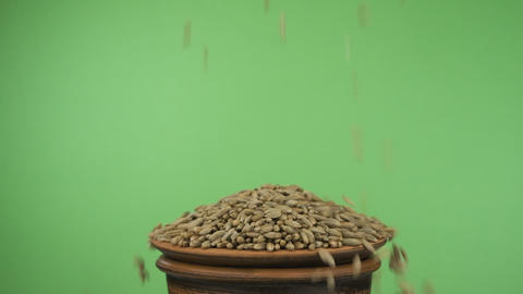 Rye grains fall into a crowded clay bowl and fall out of it. Isolated on a green Live Action