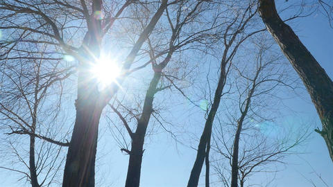 Bright sunlight shines through the trees. Camera in motion Stock Video Footage