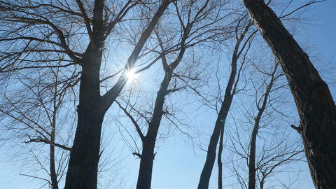Bright sunlight shines through the trees. Camera in motion Live Action