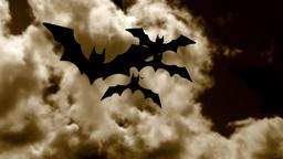 Halloween bats Animation