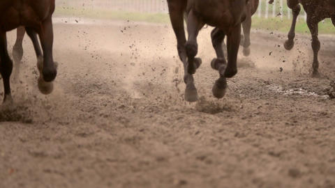 Herd of Horses Raises Dust. Slow Motion Footage