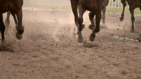 Herd of Horses Raises Dust. Slow Motion ビデオ