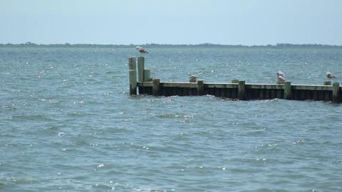 Birds sitting on a coastal dock Footage