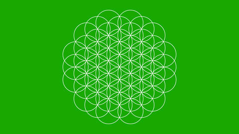 The Flower of Life Growing on a Green Screen Live-Action