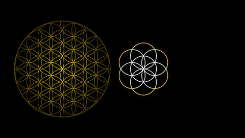 The Flower of Life The Seed of Life and the Egg of Life Live Action