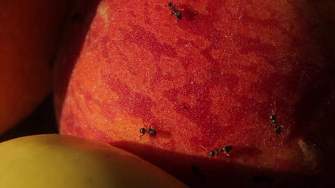 Ants on fruit. Close-up. Macro Live Action
