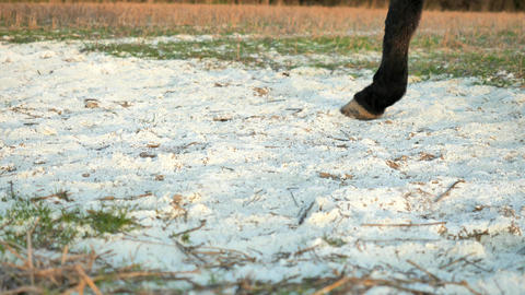 Horses are running, pieces of clay and white lime for disinfection fly from their hooves. Legs are Live Action