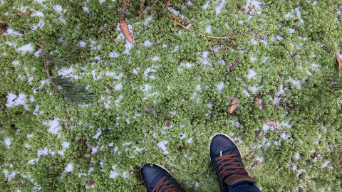The person walks in sneakers on the frozen The frozen green moss, ice, snow Live Action