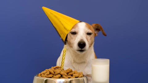 Cute dog during birthday celebration Live Action