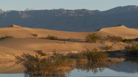 A pan across desert dunes at an oasis Footage