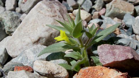 A small green plant flowers in a barren hostile desert Stock Video Footage