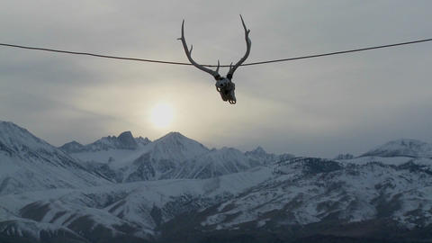 A cow skull hangs from a wire at a Western ranch Footage