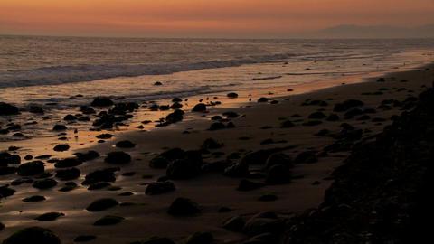 Birds graze along the shore at dusk Stock Video Footage