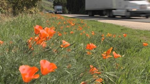 TRucks and cars pass on a California poppy lined highway Stock Video Footage