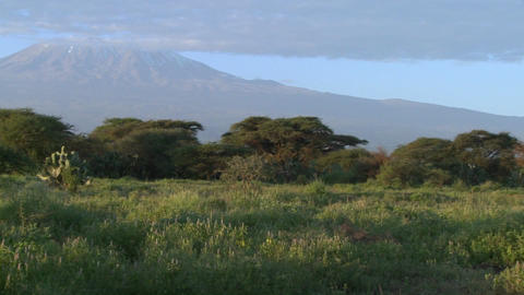 A beautiful panning morning shot of Mt. Kilimanjaro in Tanzania, East Africa Footage
