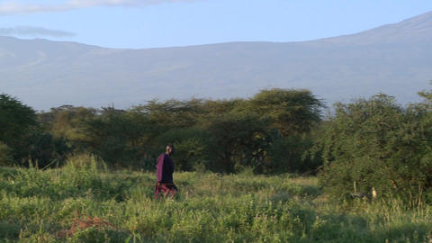 A Masai warrior walks in front of Mt. Kilimanjaro in... Stock Video Footage