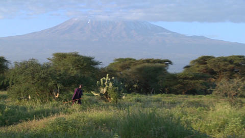 A Masai warrior walks in front of Mt. Kilimanjaro in Tanzania, East Africa at dawn Footage