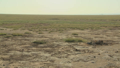 The skeleton of a dead animal lies in the desert as an... Stock Video Footage