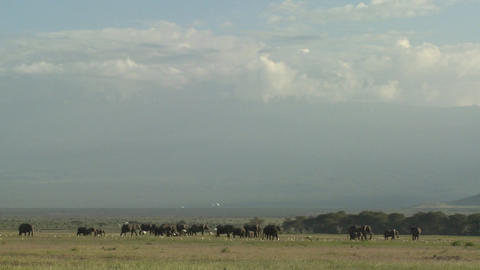 Clouds move in time lapse over a herd of elephants on the... Stock Video Footage