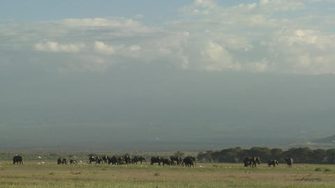 Clouds move in time lapse over a herd of elephants on the African savannah Footage