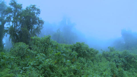 Fog rolls in over the jungle and rainforest Stock Video Footage