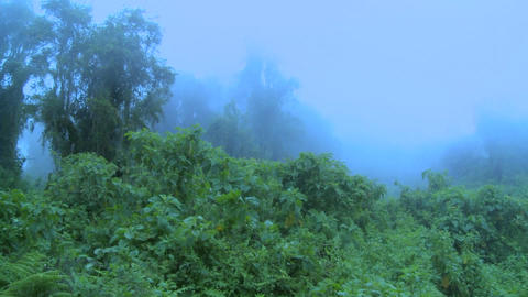 Fog rolls in over the jungle and rainforest Footage