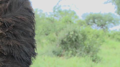 Dolly right to reveal Masai warrior face in full... Stock Video Footage