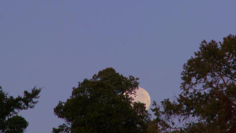 The full moon rises over the treetops against a purple sky in this time lapse shot Footage
