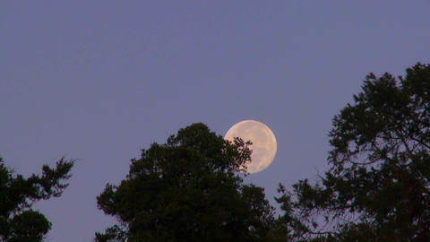 The full moon rises over the treetops against a purple... Stock Video Footage