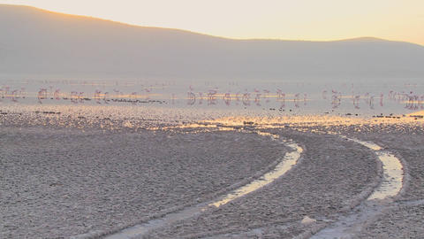 Tire tracks go into the distance at Lake Nakuru, Kenya... Stock Video Footage
