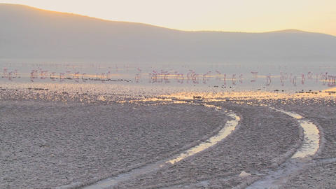 Tire tracks go into the distance at Lake Nakuru, Kenya with pink flamingos in the distance Footage