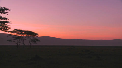 Beautiful acacia trees at sunrise on the plains of Africa Footage