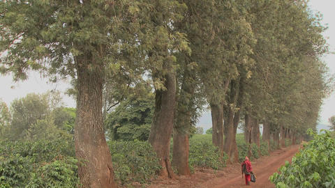 A worker at a coffee plantation walks down a dirt road in Africa Footage
