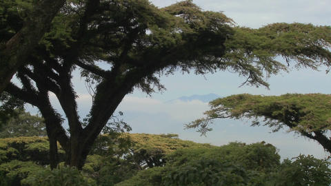Acacia trees loom over the crater at Ngorongoro Crater in Tanzania Footage
