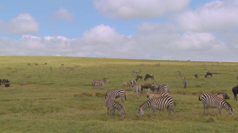 A pan across the African savannah with zebras and... Stock Video Footage