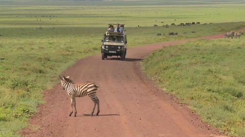 A safari jeep encounters a zebra on an African road Stock Video Footage