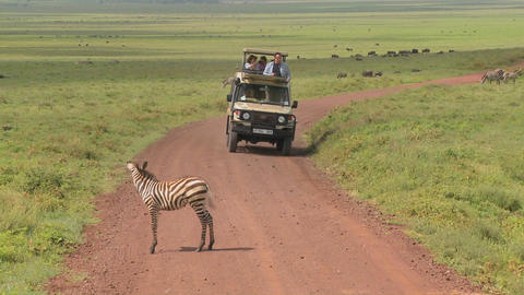 A Safari Jeep Encounters A Zebra On An African Road stock footage